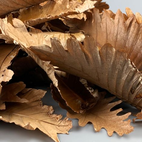 Dark Dried Leaves x 10, approx. 21 cm long by 11 cm Wide, Natural Dried Floral Deco