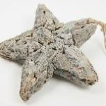 Star-Rebirth-Bark-30cm.jpg