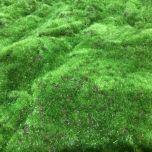 faux Moss - www.BrandonThathers.co.uk