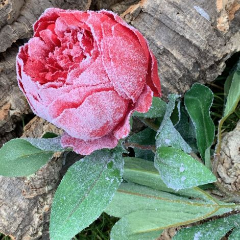 Peony Frosted, Red, 79cm tall, artificial bloom, leaves, poseable stem