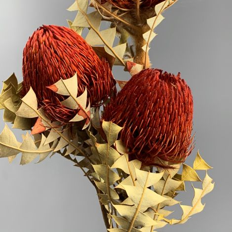 Xmas Baxterii Red, 70 cm tall dried flower, floral decoration
