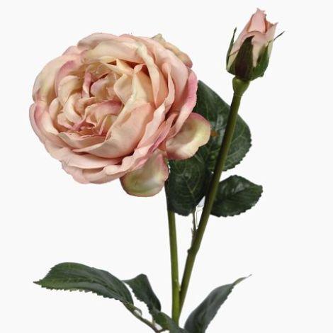 Vintage Rose Peach