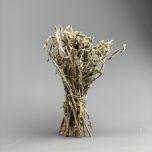 Sage 20cm long - www.BrandonThatchers.co.uk