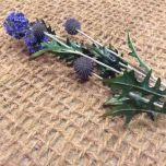 Globe Thistle, Purple, 92cm - www.BrandonThatchers.co.uk