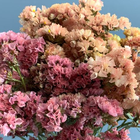 Statice, Peach-Melba, approx. 75cm tall Natural dried flowers. Indigenous UK grown