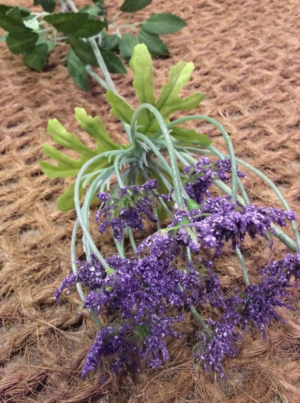 Anethum Spray Purple www.BrandonThatchers.co.uk