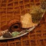Brandon-Thatchers-coco-leaf-palm-ring-shell-moss-lichen-exotics-coir-pillow-e1506431826688.jpg