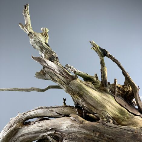 Stumps With Roots, variety of sizes and shapes in stock