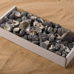 SHELL GRAY SNAIL BOX.jpg