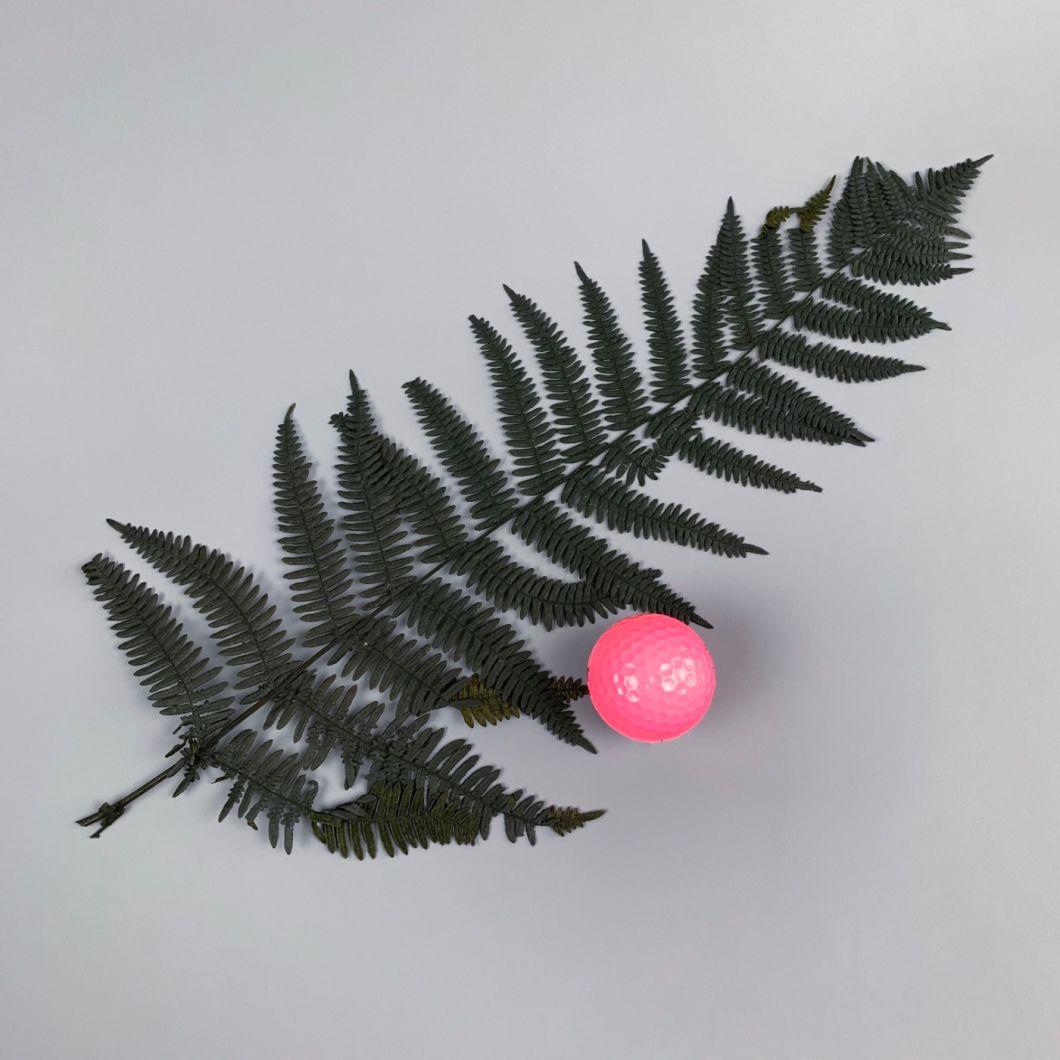 black fern - www.BrandonThathers.co.uk