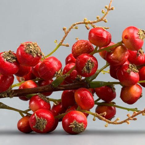 Bird Berries Red or Orange, approx. 35 cm long by 8 cm diameter with 35 berries