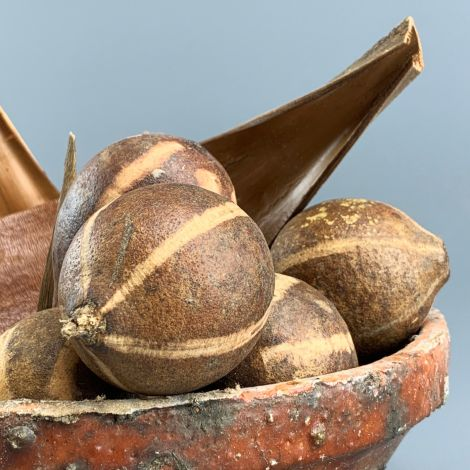 Bellani Pods x 6, approx. 4 to 6 cm diameter nut, natural dried floral deco