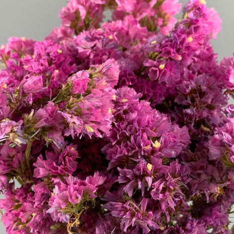 Statice Pink, approx. 75cm tall natural dried flowers, indigenous UK grown
