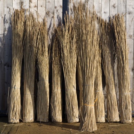 Water Reed Bundle, approx. 2 m plus tall by 25 cm diameter. Complete with seed head. Natural, dried, thatching material
